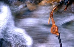 ©SEBASTIEN JARRY/MAXPPP ; Paysage de montagne. ILLUSTRATION racine au bord d'un torrent.